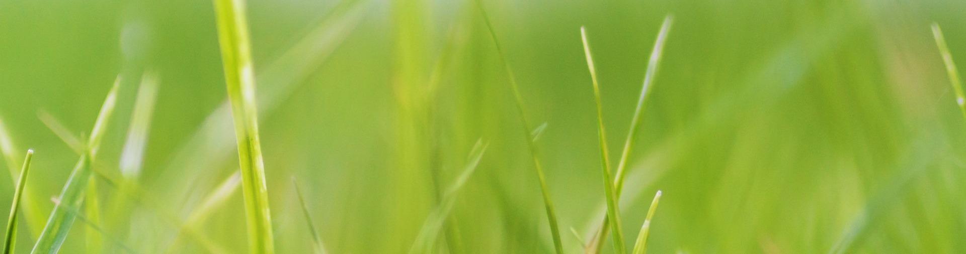 Slider-Rasen
