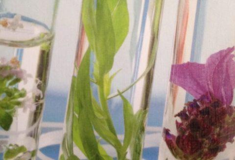 Ätherische Öle – ungeahnte Pflanzenkraft